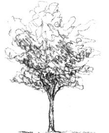 sizeable-tree-giveaway